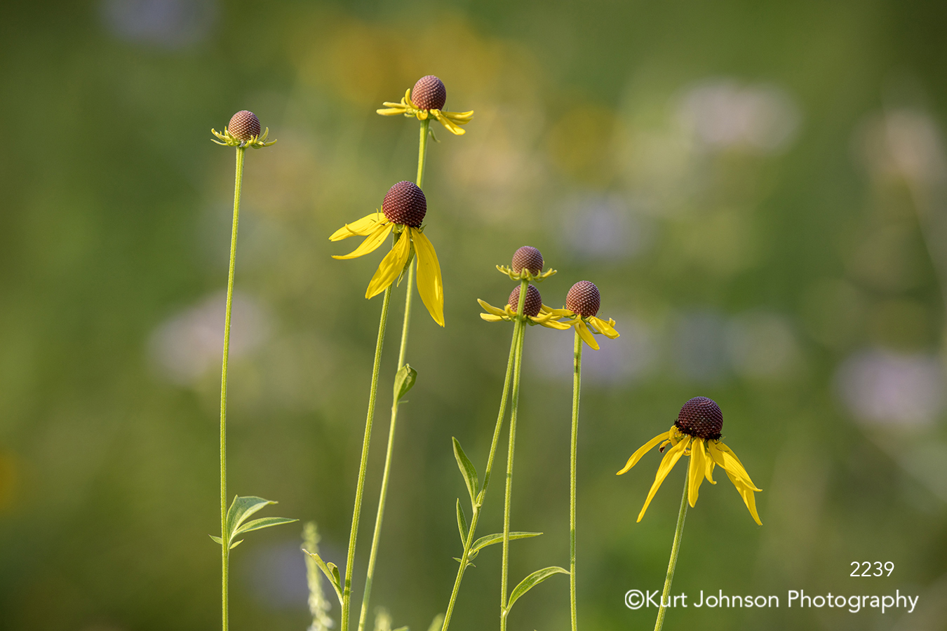 yellow flower flowers wildflower wildflowers field green grass grasses colorful bright happy close up detail macro