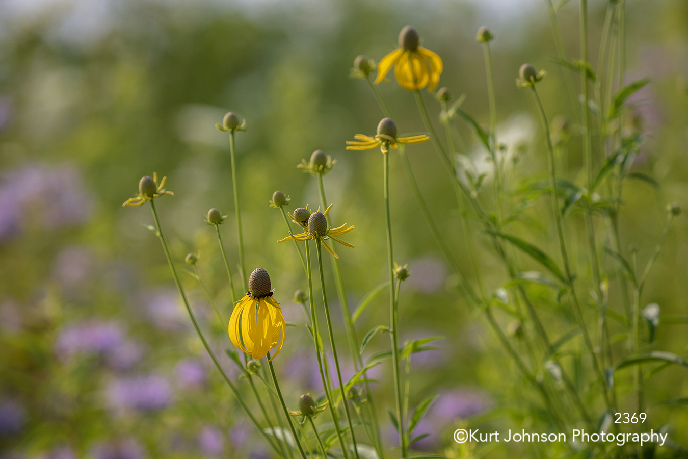 yellow flower flowers wildflower wildflowers field green grass grasses colorful bright happy close up detail