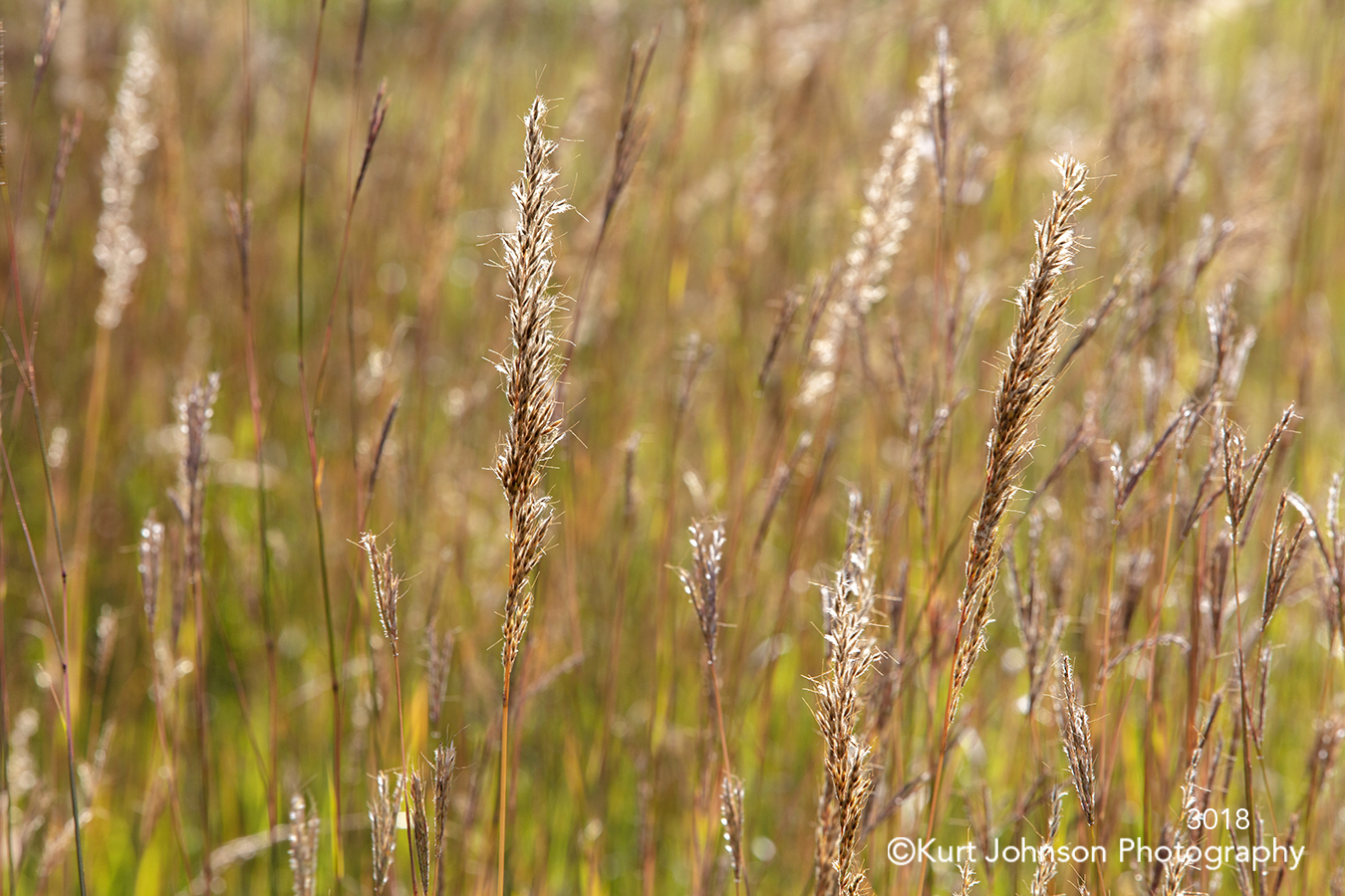 brown gold copper grass grasses lines pattern texture detail macro