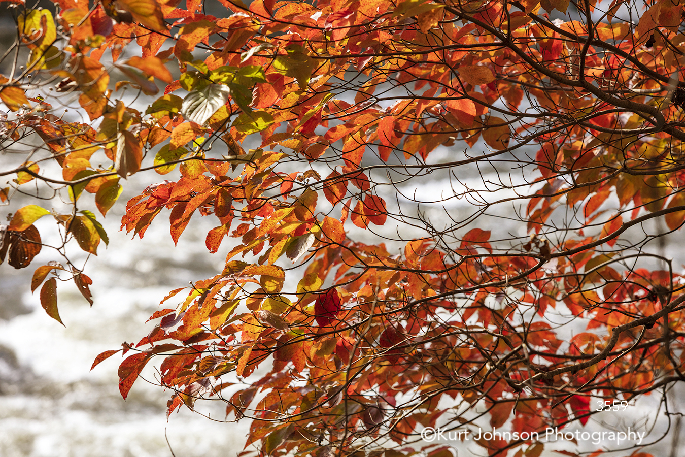 red orange leaves fall autumn tree trees branches
