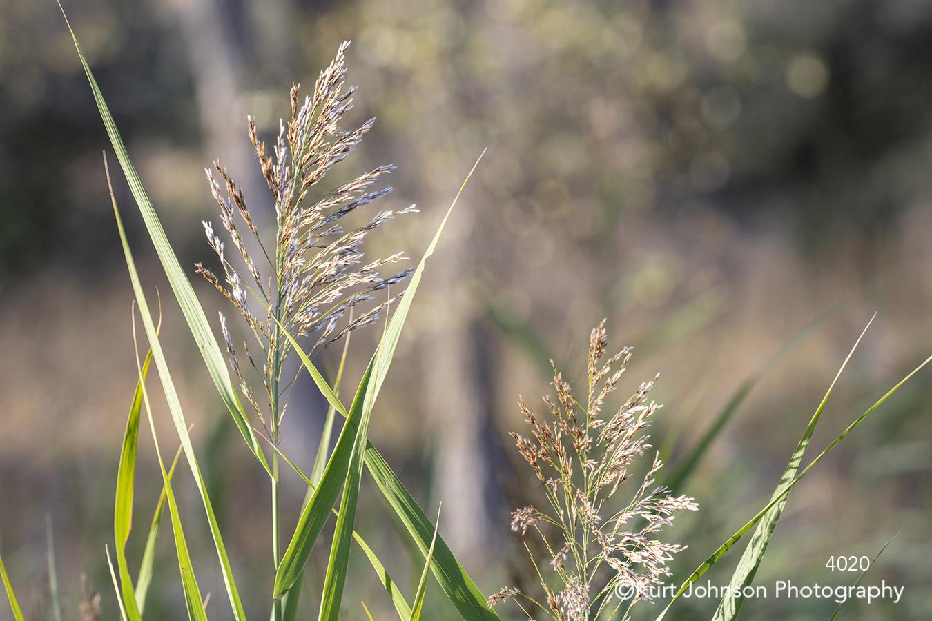 green grass grasses wheat field lines pattern texture close up detail