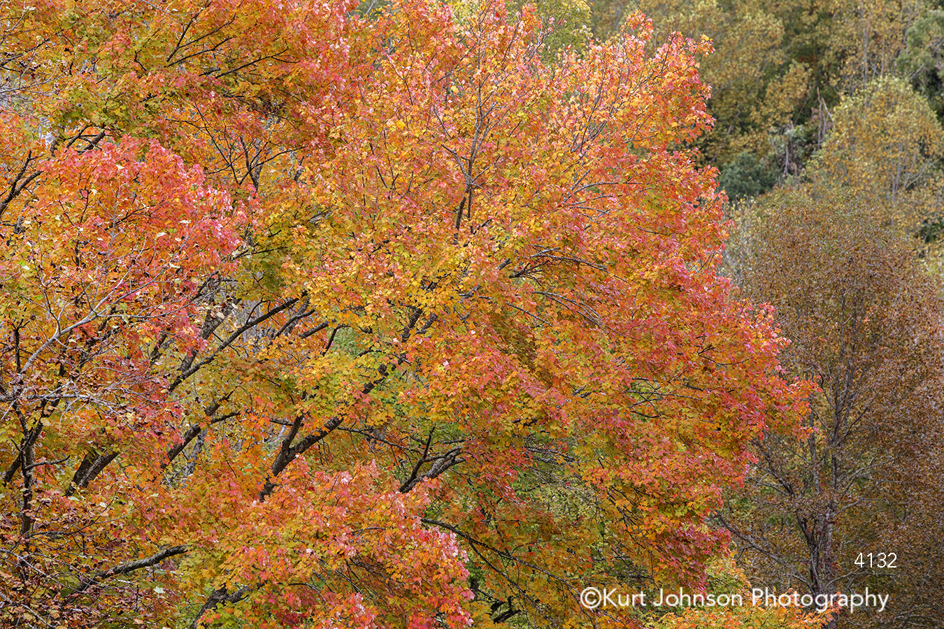 orange red trees tree leaves forest branches autumn fall