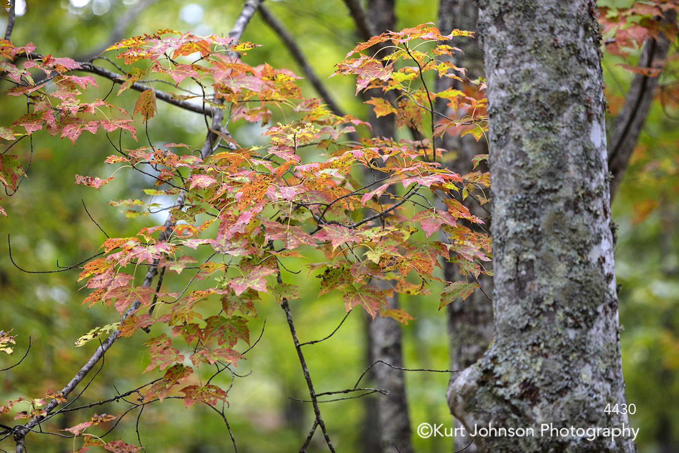 orange leaves tree trees branches green forest autumn fall