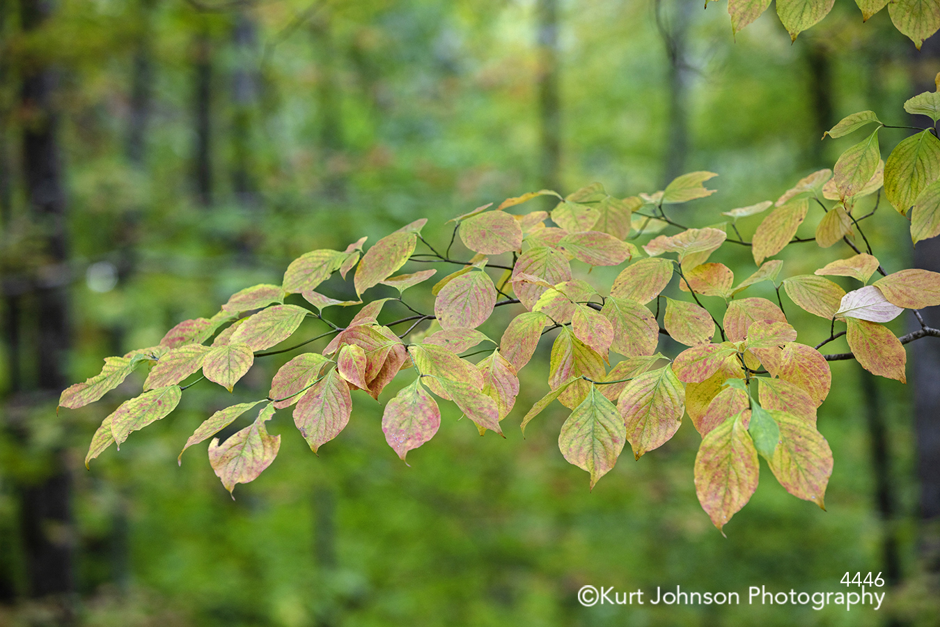 green leaves tree forest trees close up detail autumn fall color