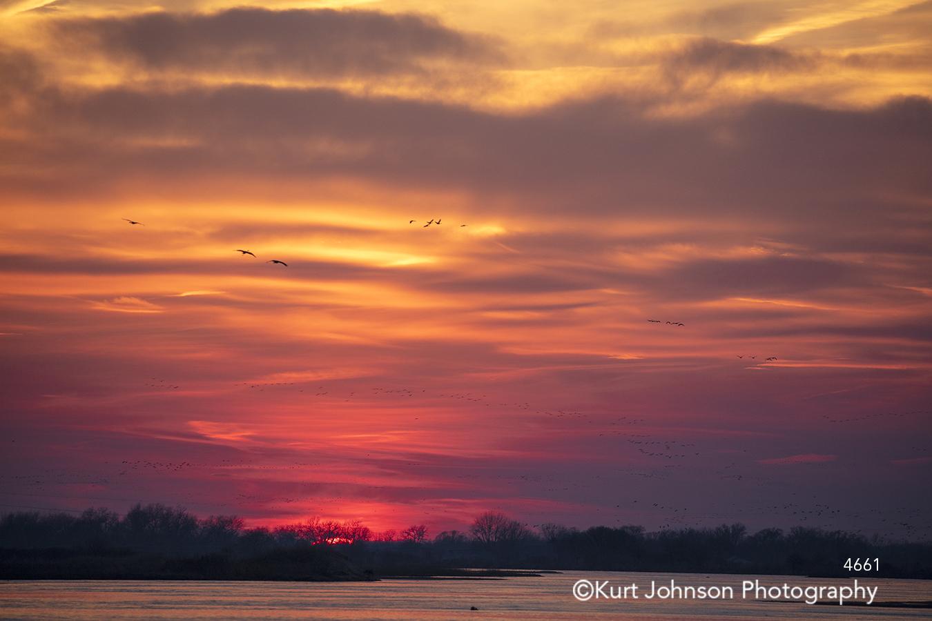 purple pink sunset sunrise sky clouds birds horizon water trees waterscape
