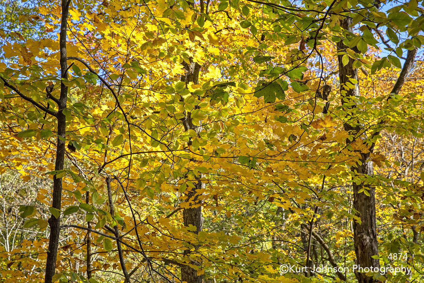 yellow orange fall autumn tree trees leaves branches landscape forest