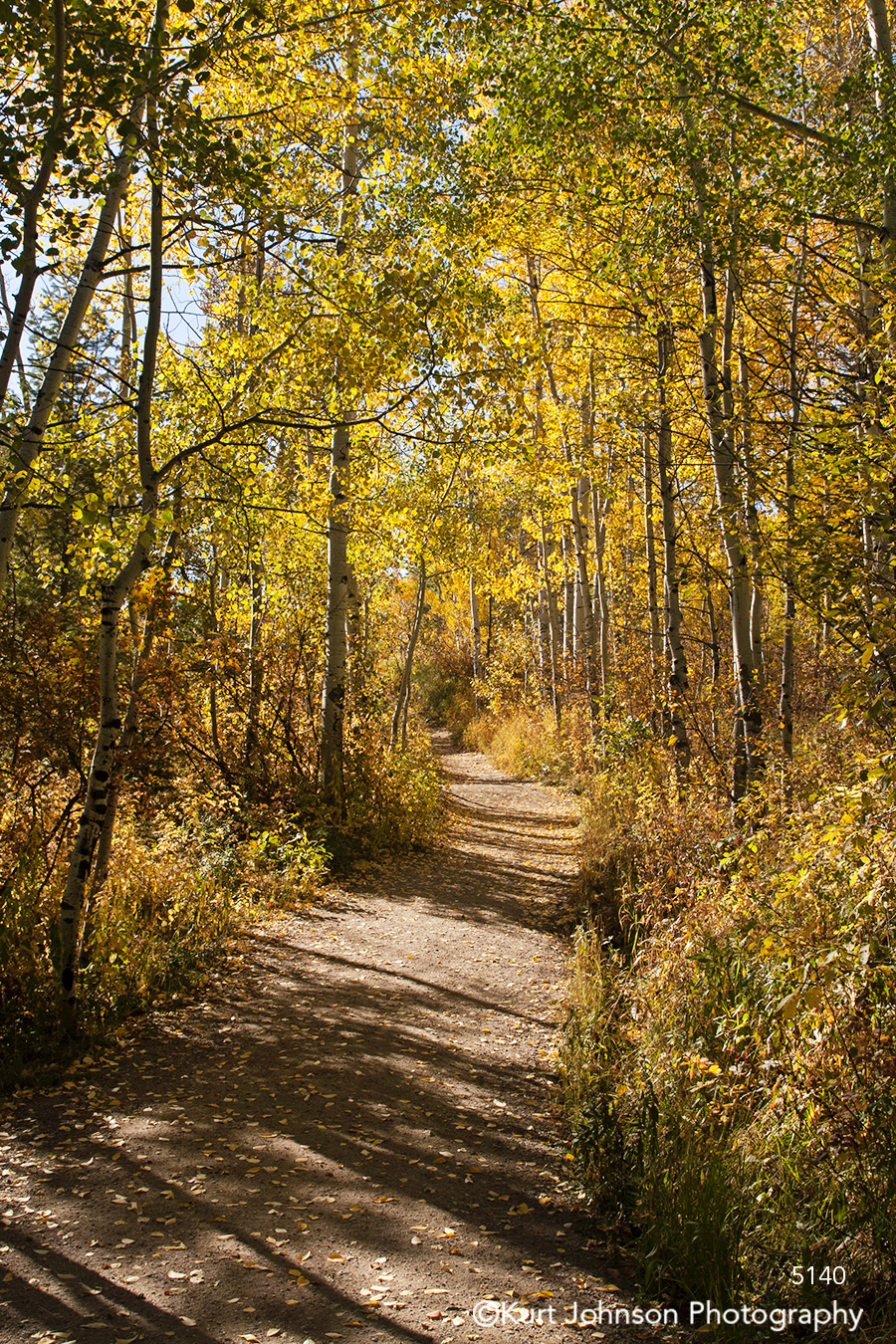 yellow tree trees autumn fall dirt path forest road landscape