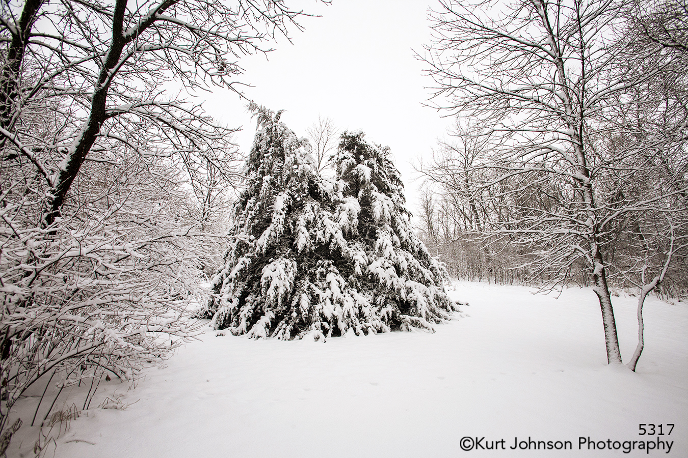 winter white snow trees tree forest branches