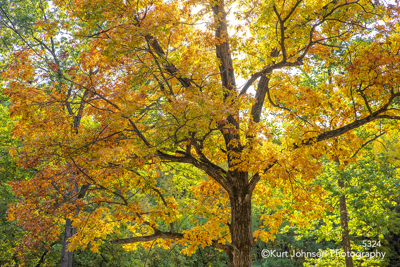 orange yellow green tree autumn fall trees forest branches leaves