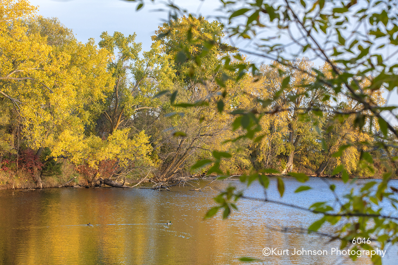 green yellow autumn fall leaves still calm water waterscape trees landscape
