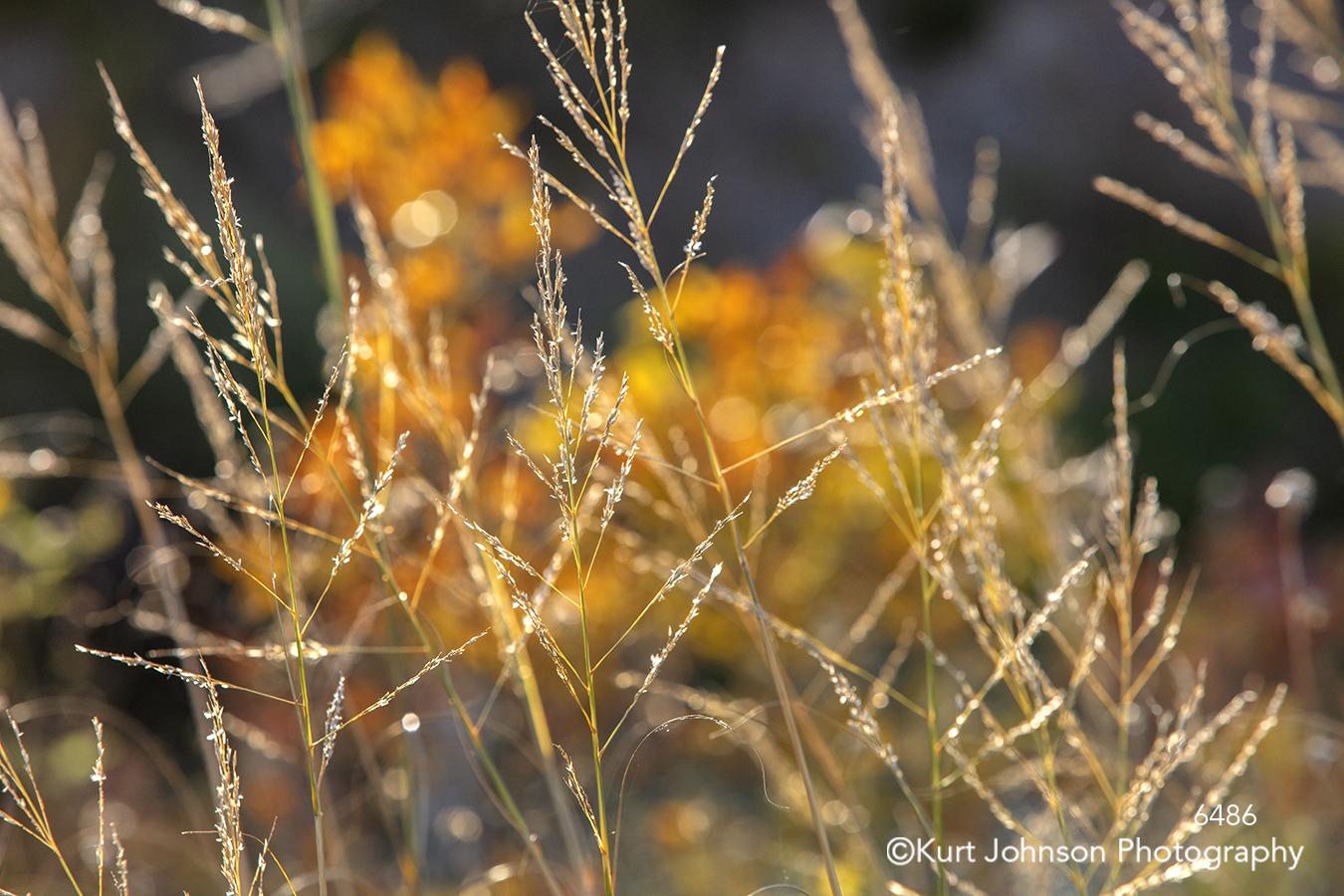 gold brown wheat grass grasses orange flower field wildflowers texture lines pattern
