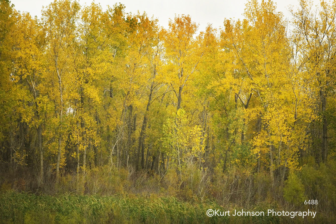 yellow trees green grass forest autumn fall branches landscape