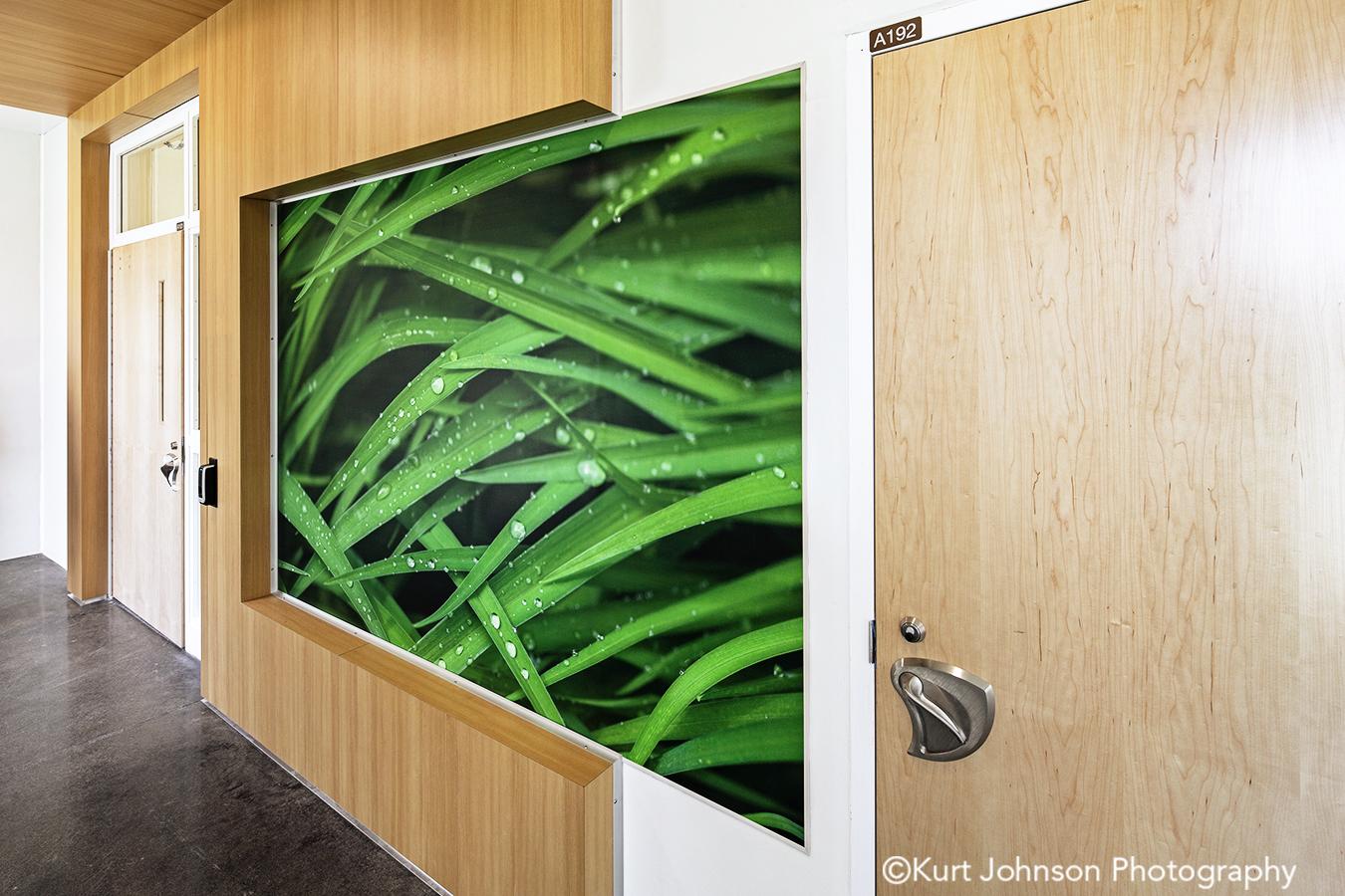 fulton state hospital missouri mo behavioral health Koroseal fusion wall protection green grass corridor hallway wayfinding art install installation grasses