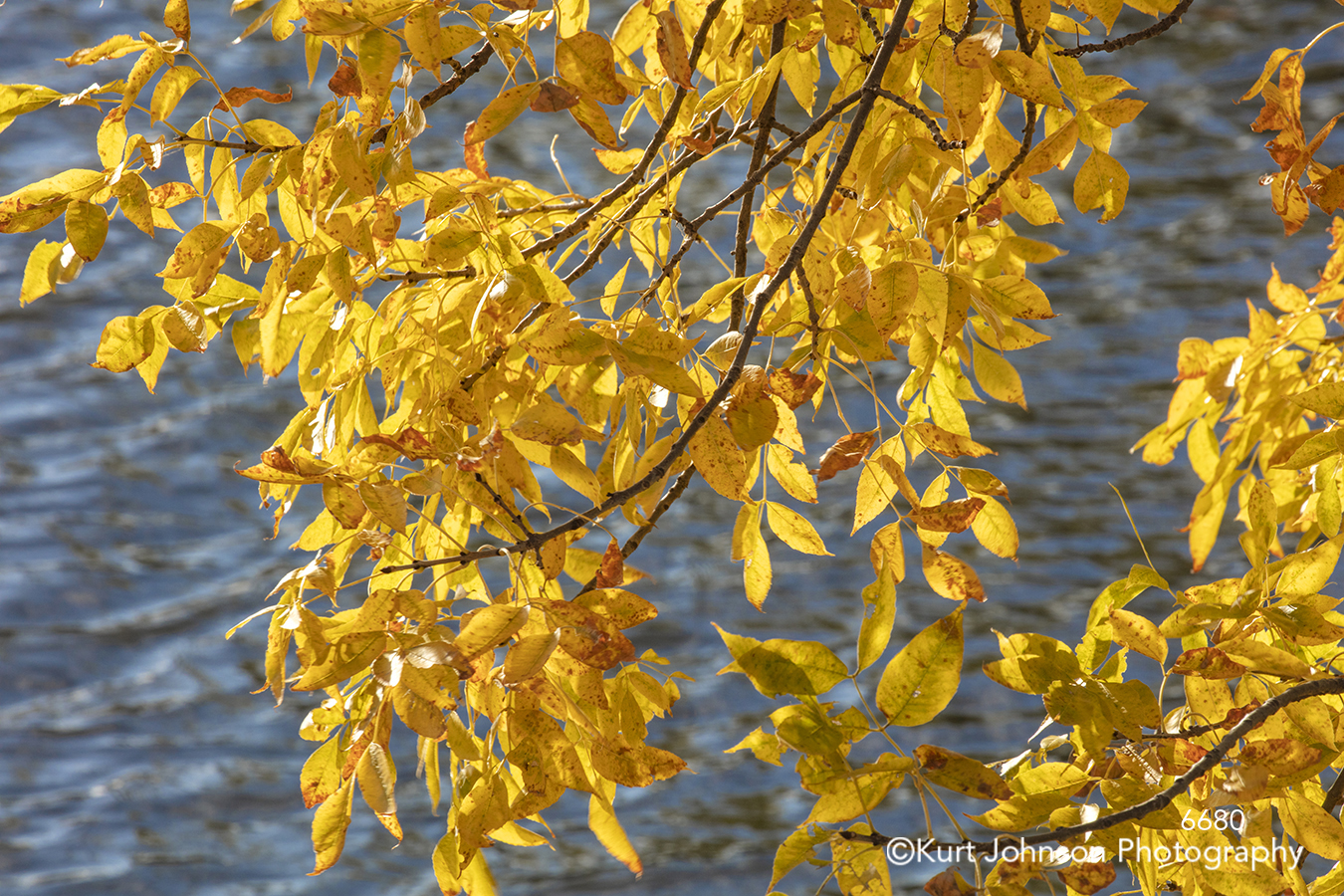 yellow leaves branch branches tree water waves waterscape trees