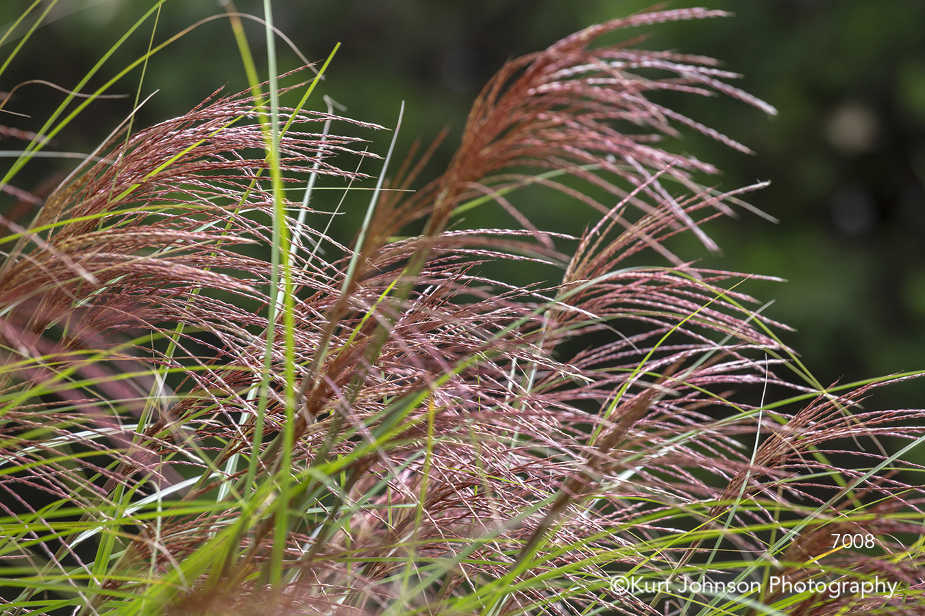 red green grass grasses texture pattern close up lines
