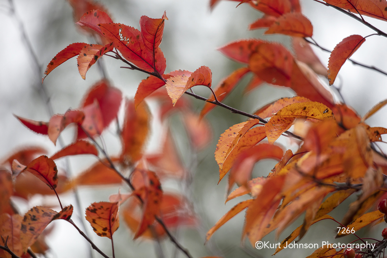 red leaves branch tree branches close up detail autumn fall color