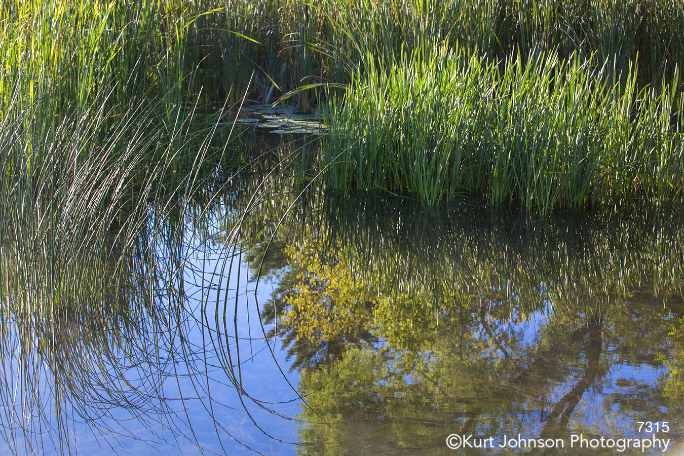 blue water waterscape green grasses pond stream river reflection