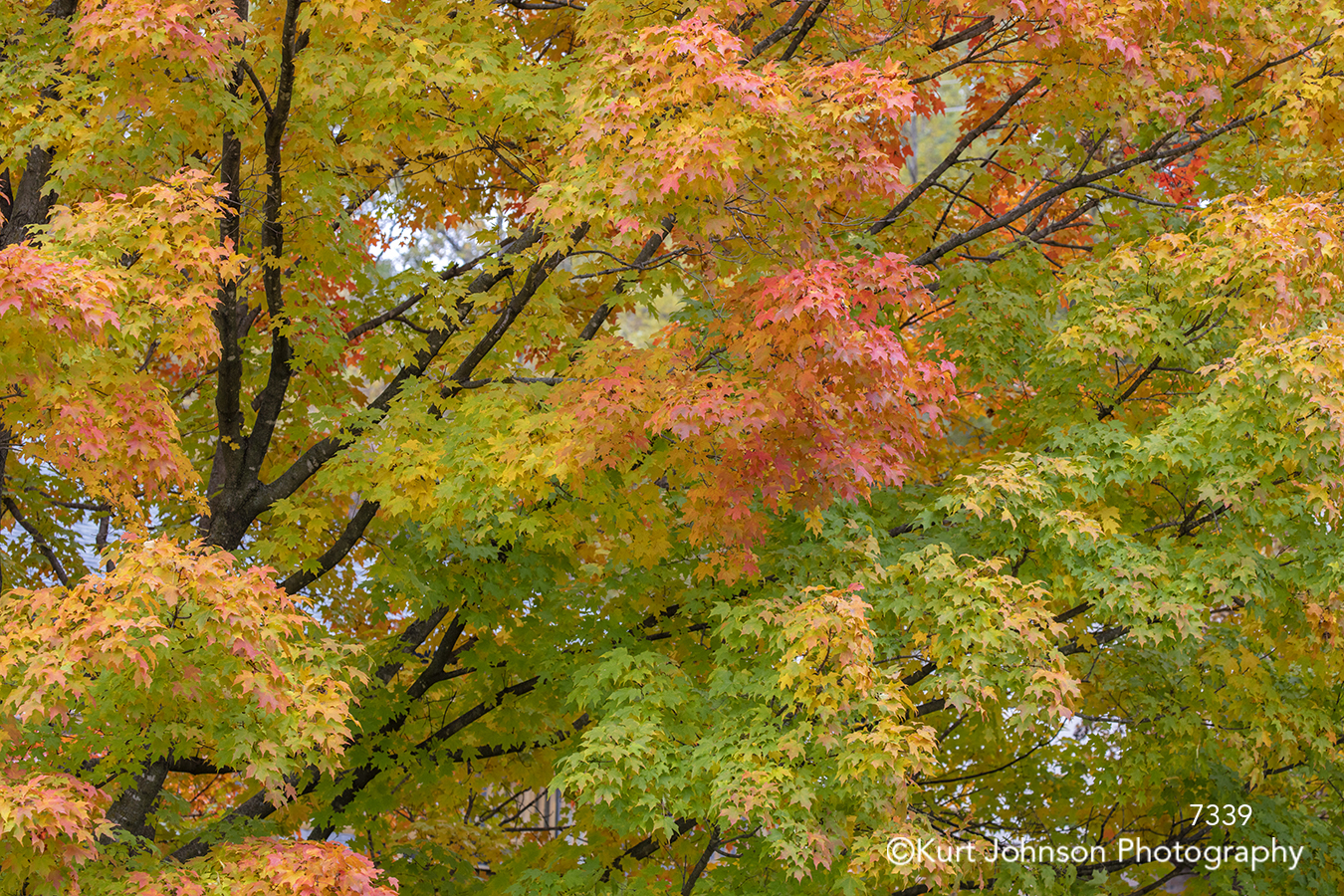 green orange yellow autumn fall tree trees branches colorful leaves