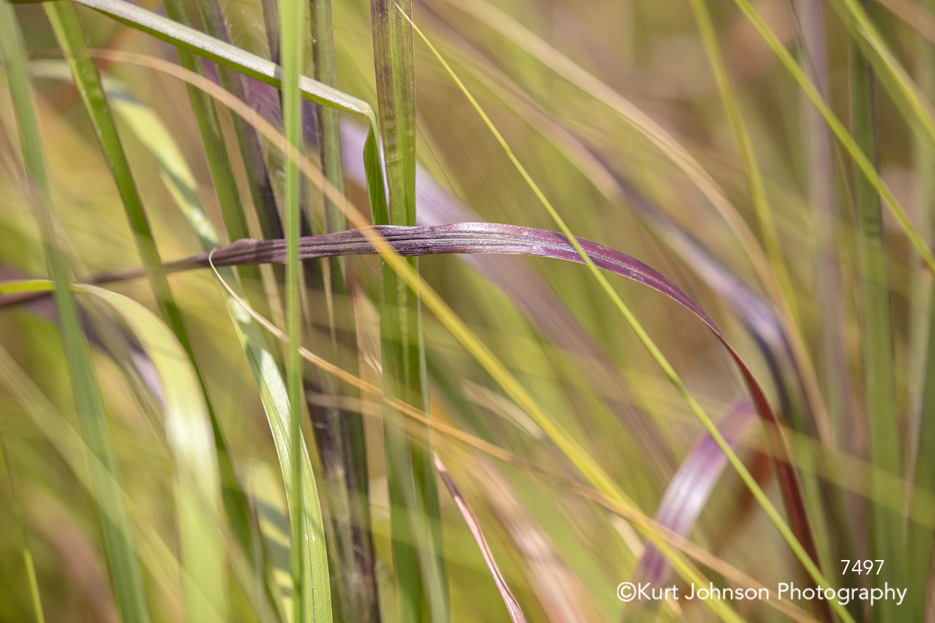 green red brown grass grasses close up detail lines texture pattern