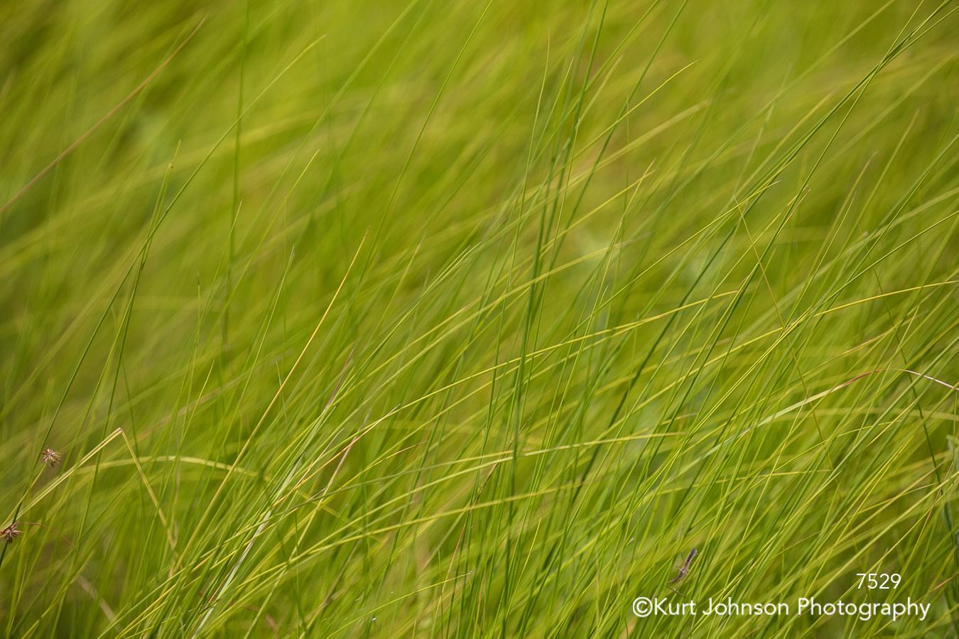 green grass grasses lines pattern texture close up detail
