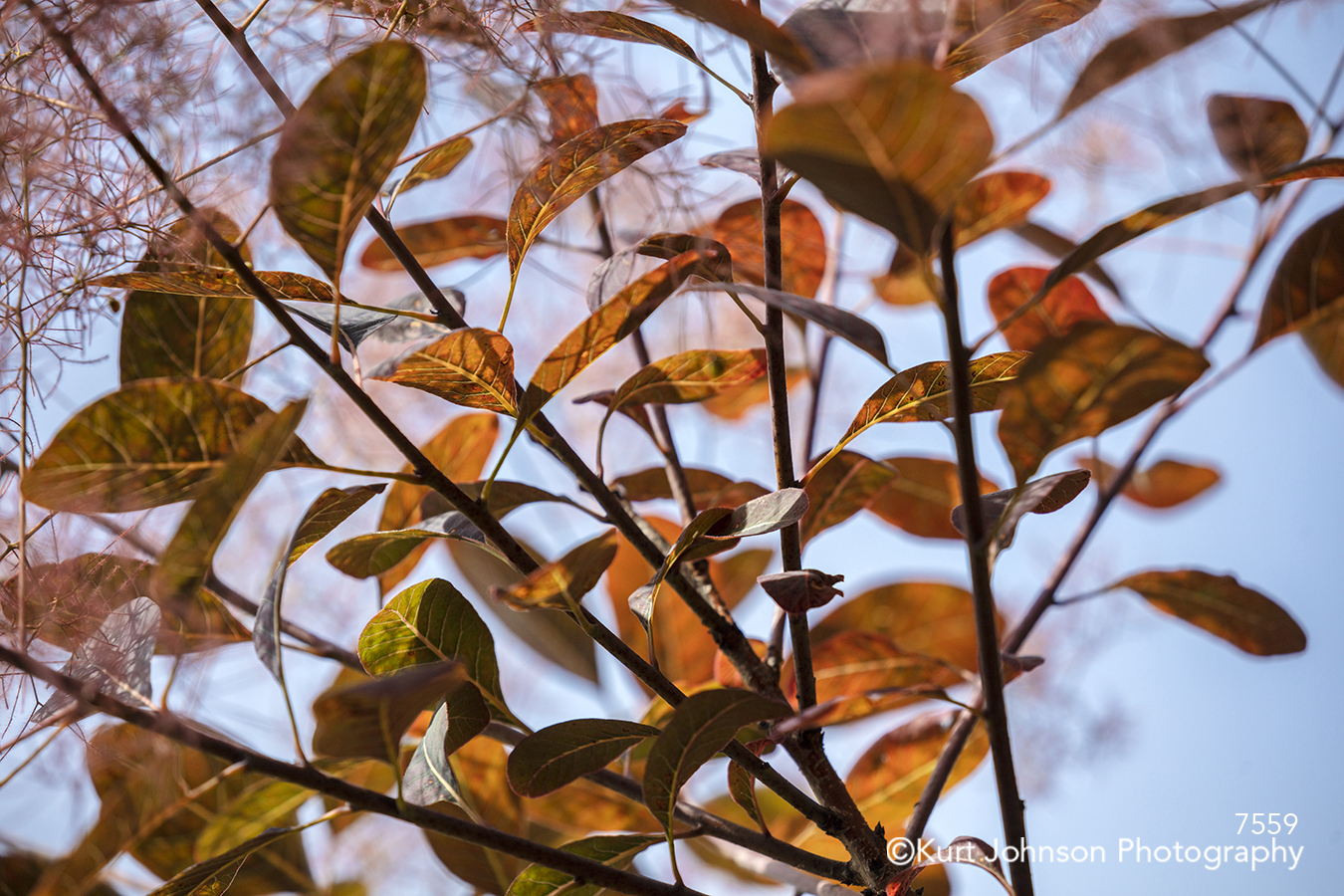 red leaves branches blue sky forest tree trees lines pattern texture