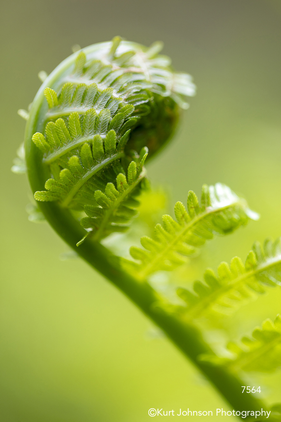 green bloom flower fern close up macro detail pattern leaf leaves