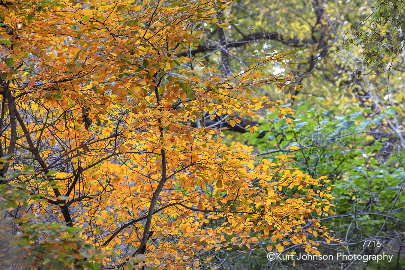 yellow orange green trees leaves forest branches autumn fall