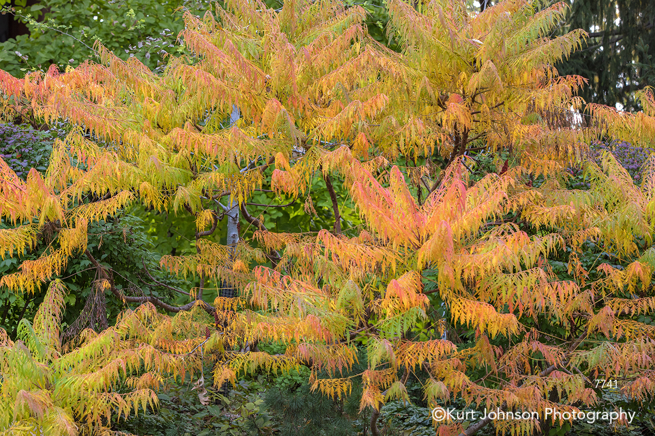 orange yellow green autumn fall leaves tree trees