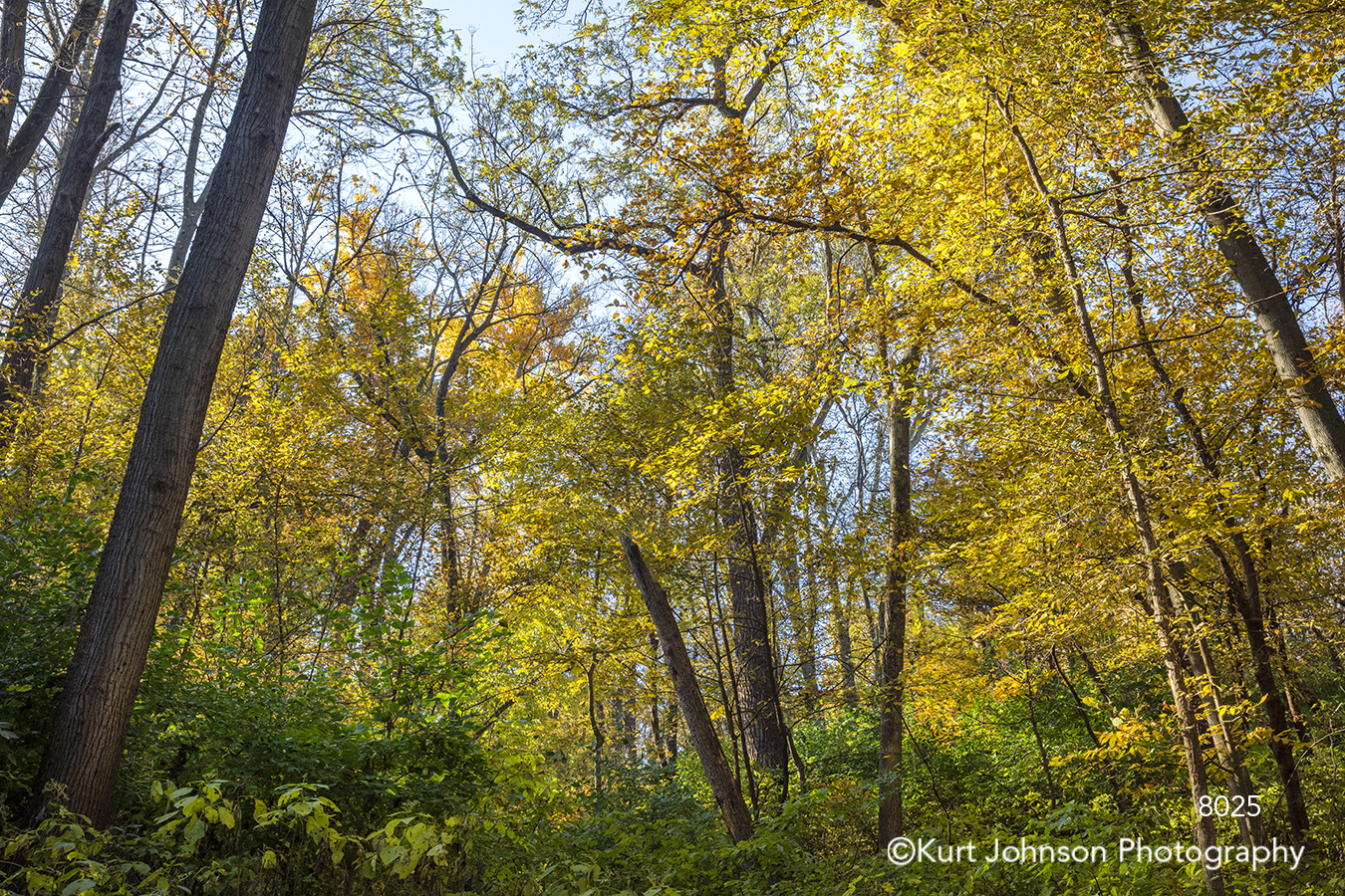 yellow autumn fall green trees forest branches woods forest landscape