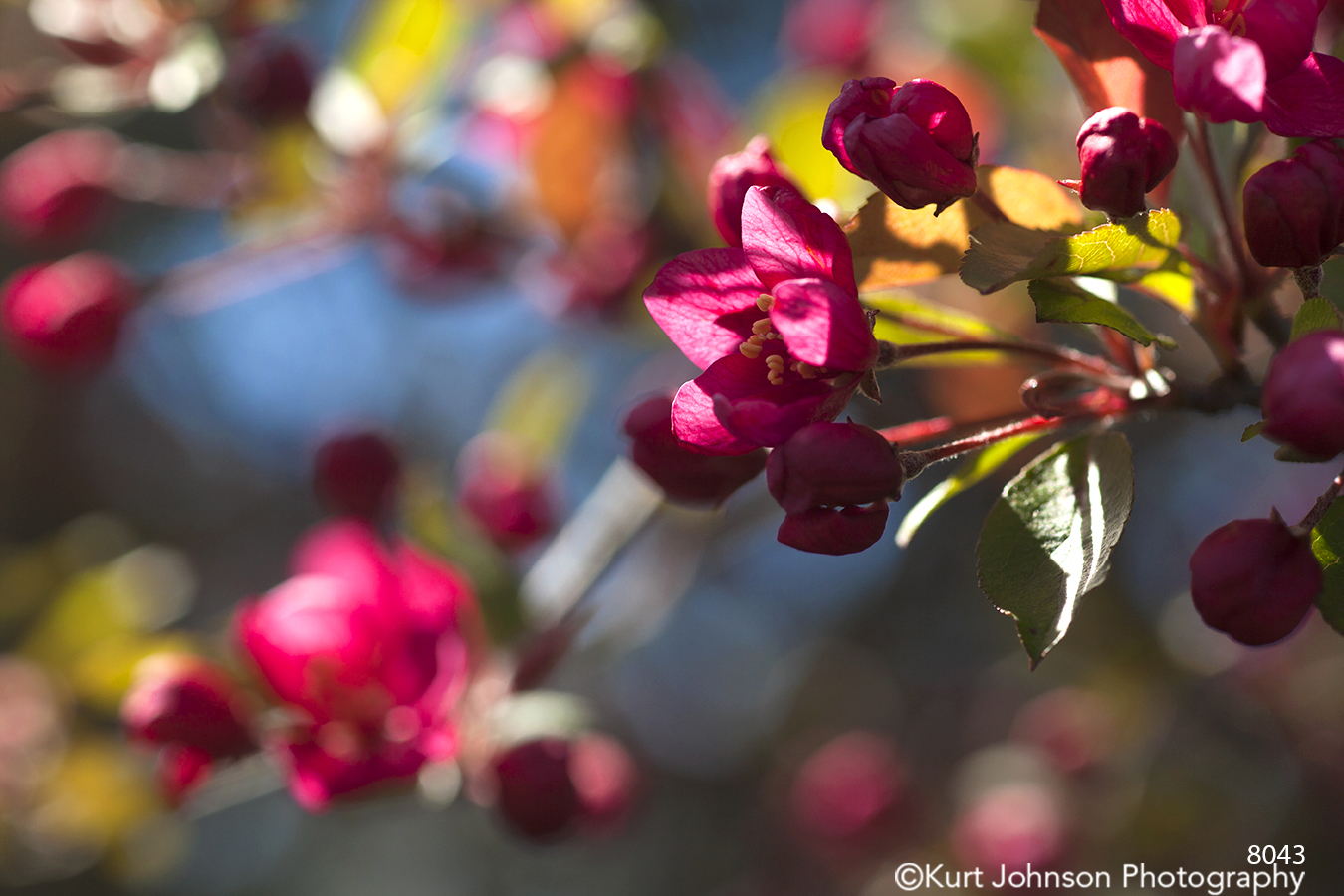 red spring blooms blossom leaves branches tree buds