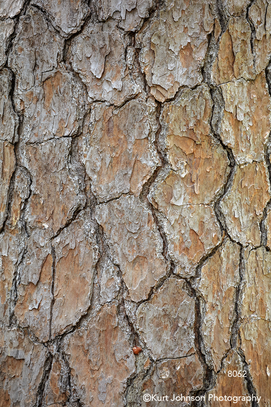 brown gray bark close up detail macro pattern tree lines texture