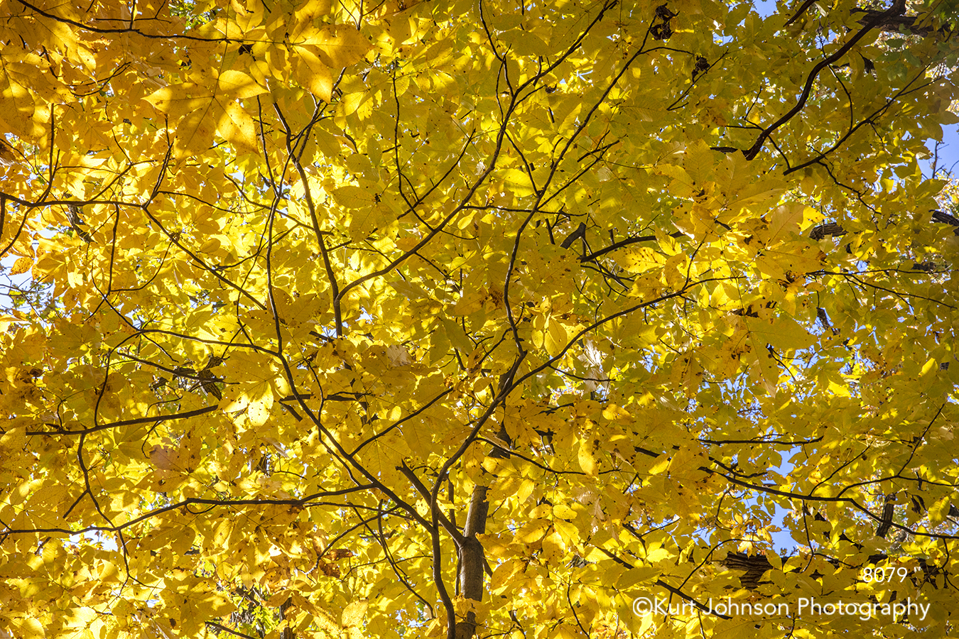 yellow gold tree trees leaves branches fall autumn leaves