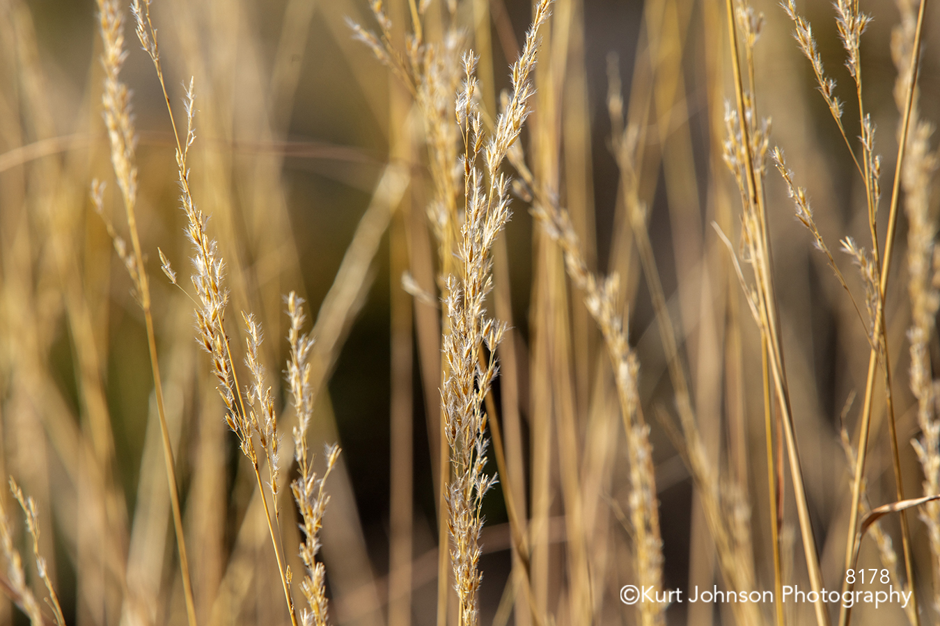 brown gold copper yellow green grass grasses lines pattern texture detail macro