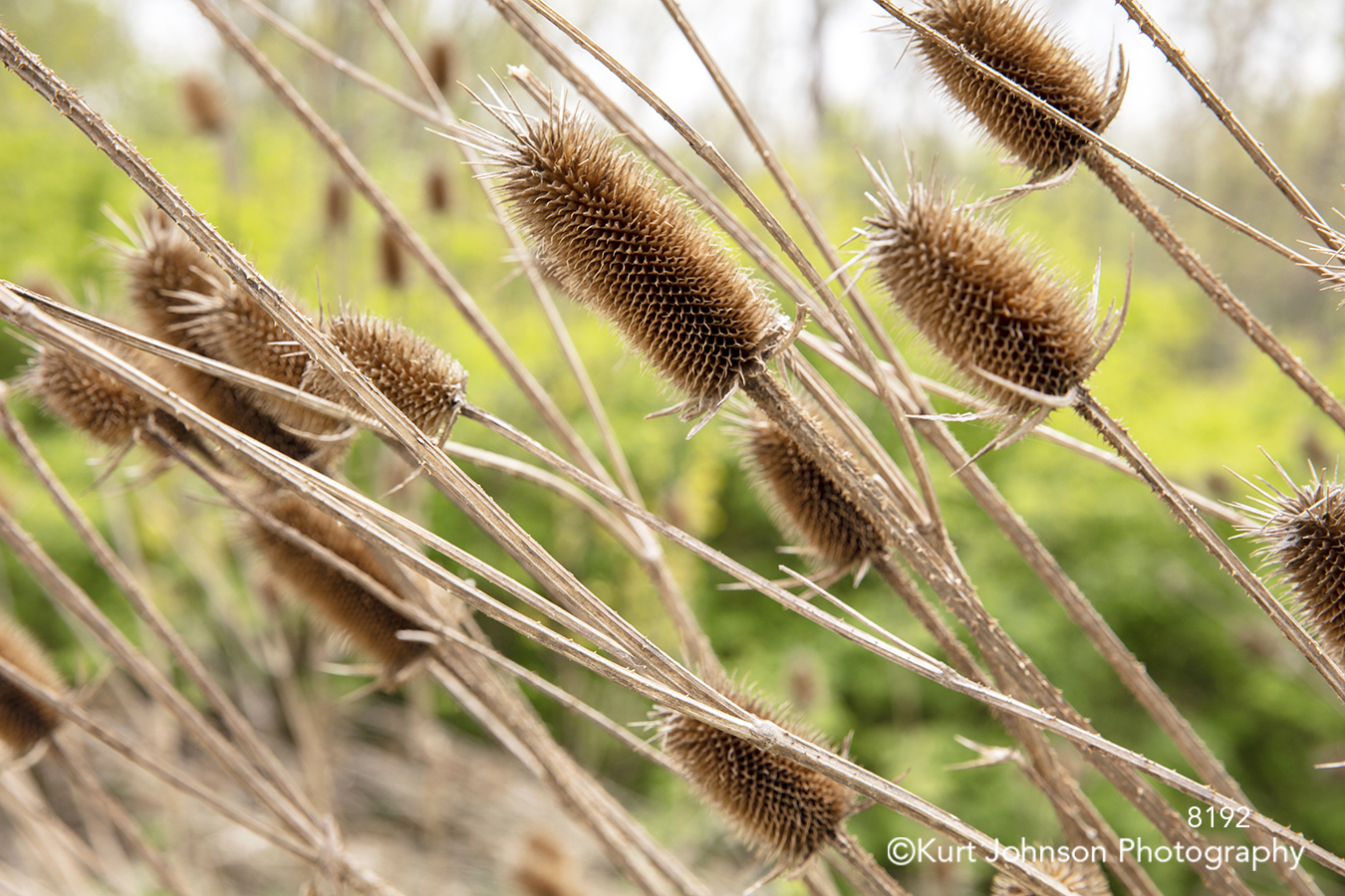 brown grass grasses field wheat close up detail lines pattern texture
