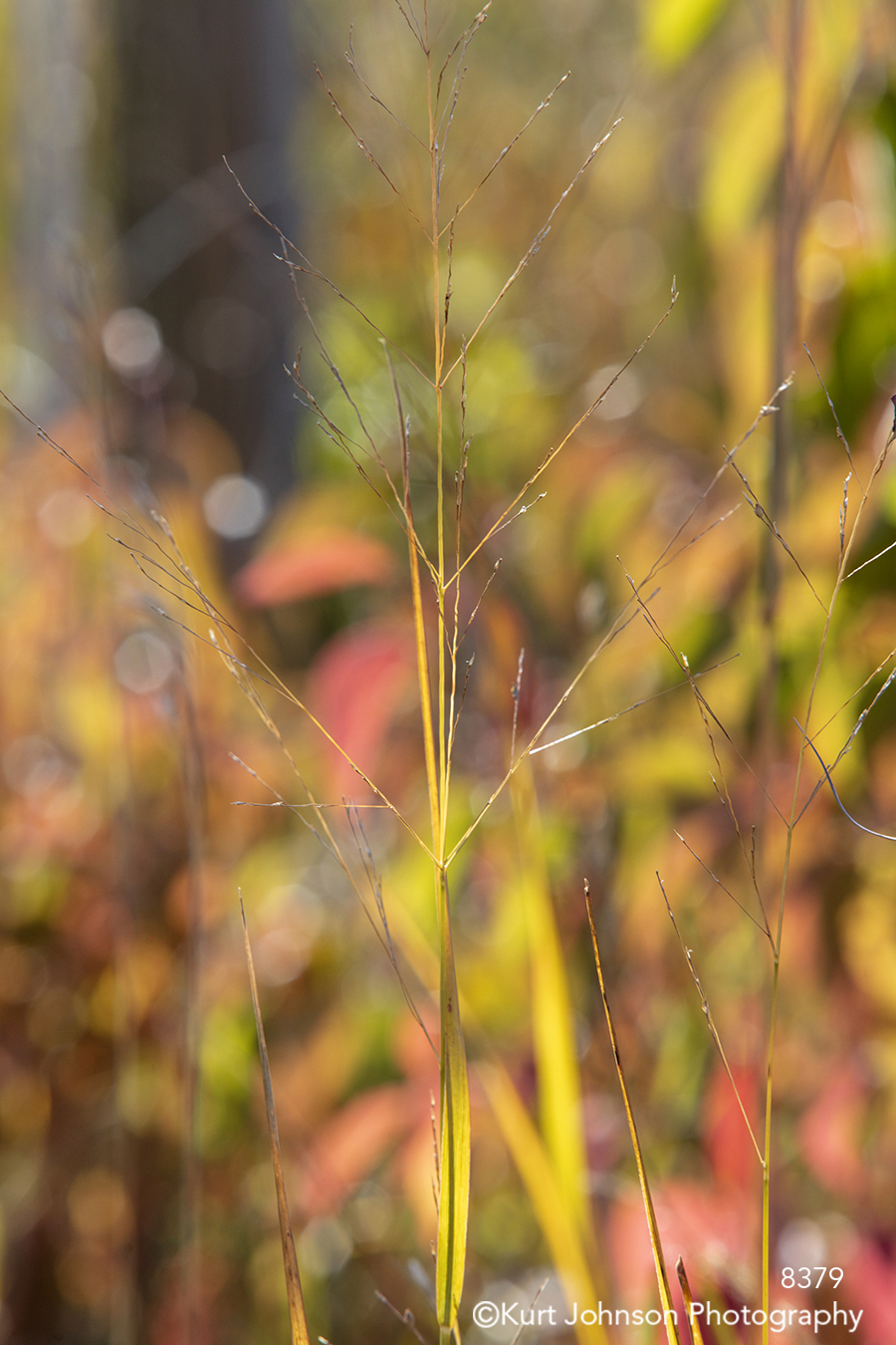 green red yellow grass grasses field wheat lines pattern texture