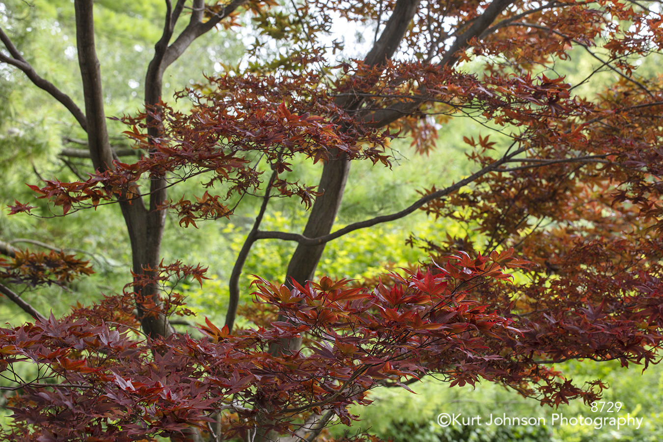 red leaves green tree trees landscape forest close up branches detail