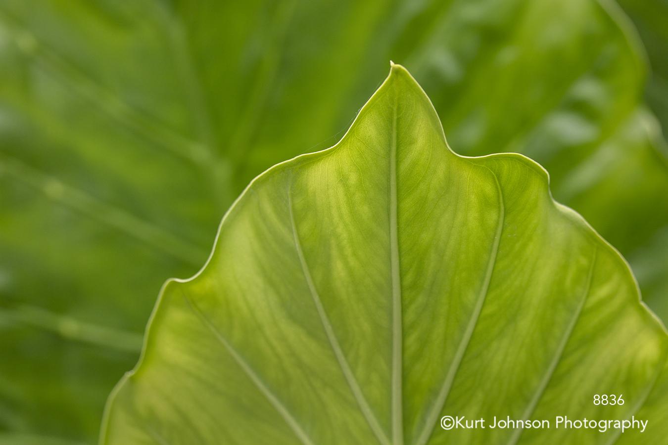 orange brown leaf leaves close up detail macro lines pattern texture tree trees