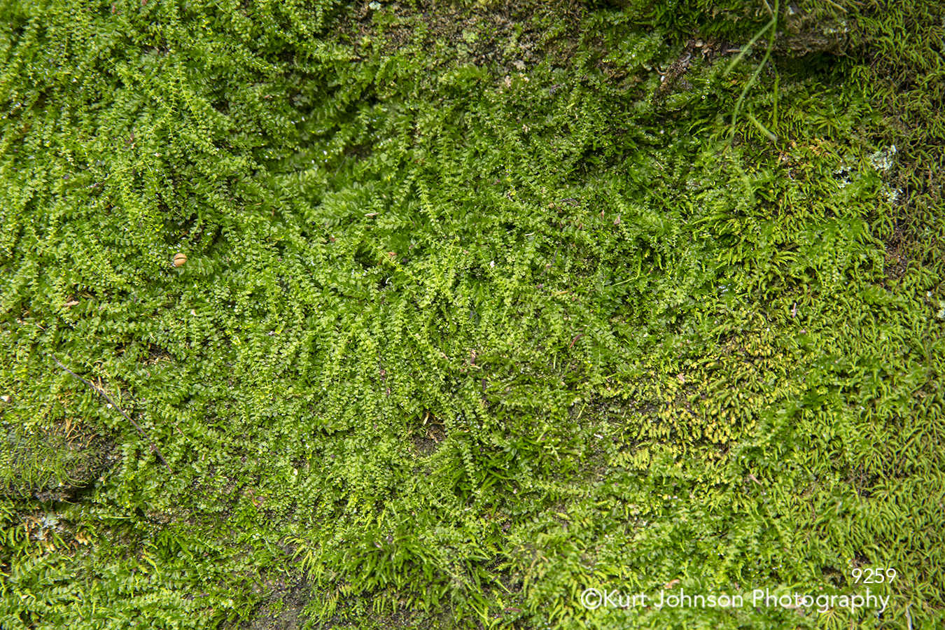 green leaves vine grass cover grasses wall pattern texture detail close up