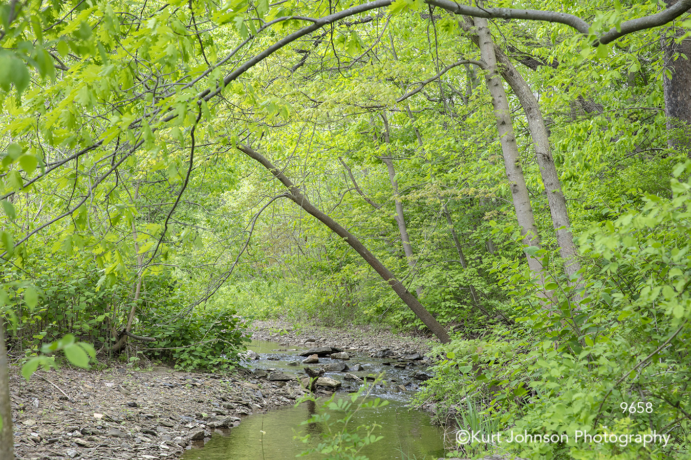 green trees branches forest river stream calm still water waterscape landscape
