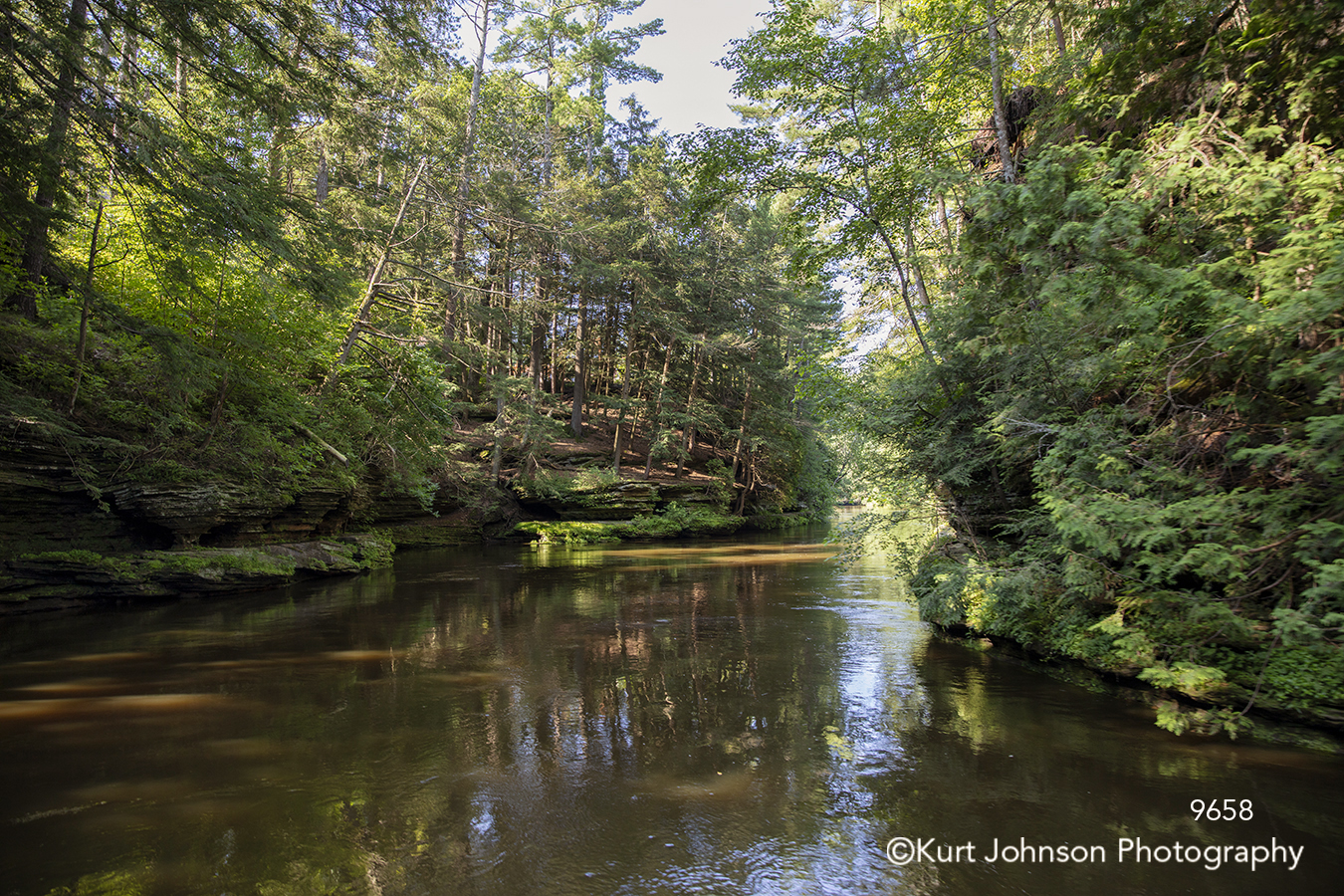 water stream river green trees forest waterscape landscape