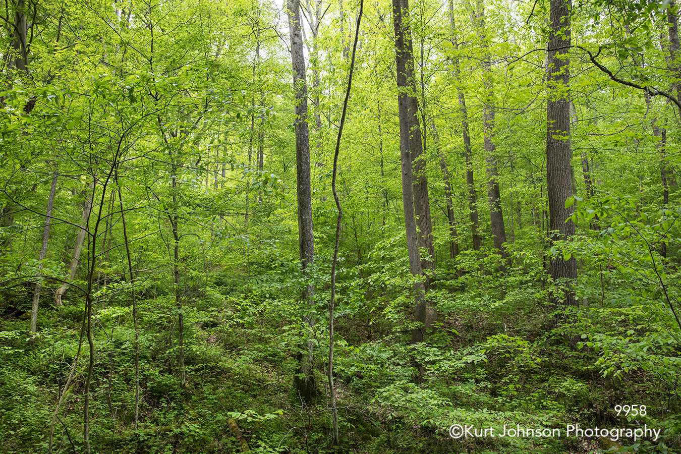 green tree trees branches forest leaves landscape
