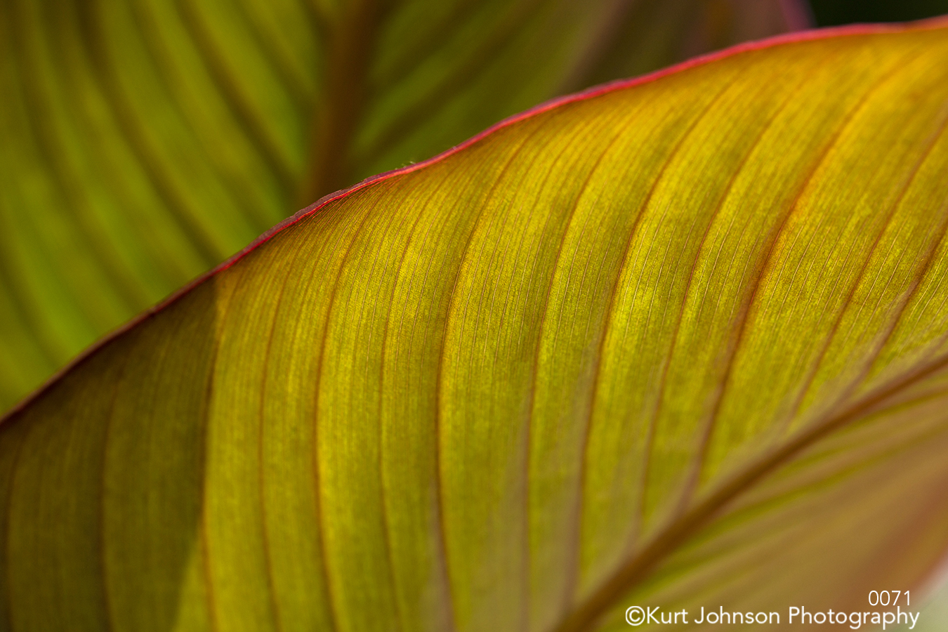 yellow green leaves lines pattern textures texture close up macro details