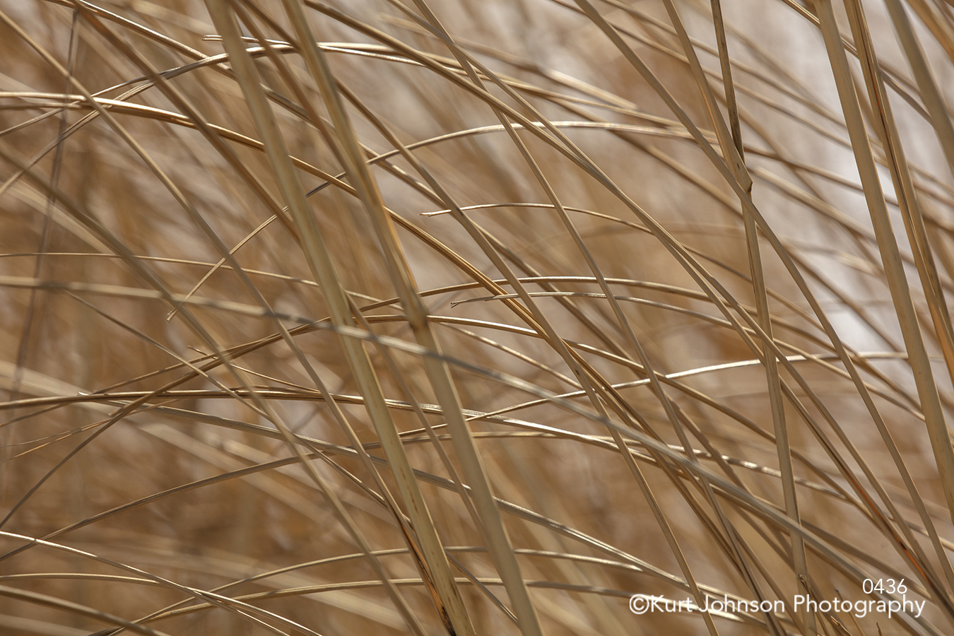 brown grass grasses line texture pattern field close up detail macro