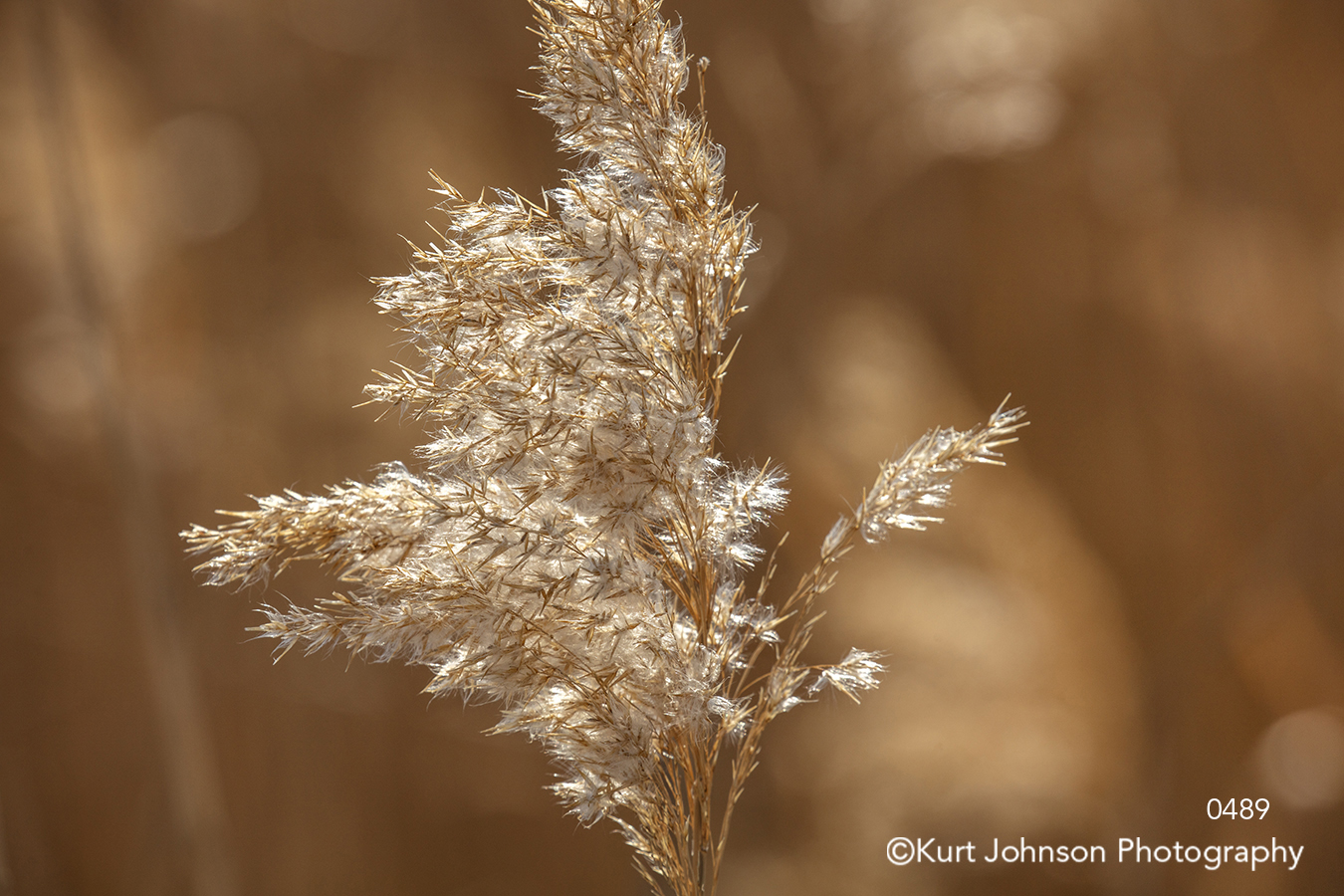 brown gold copper grass wheat field close up detail grasses texture textures