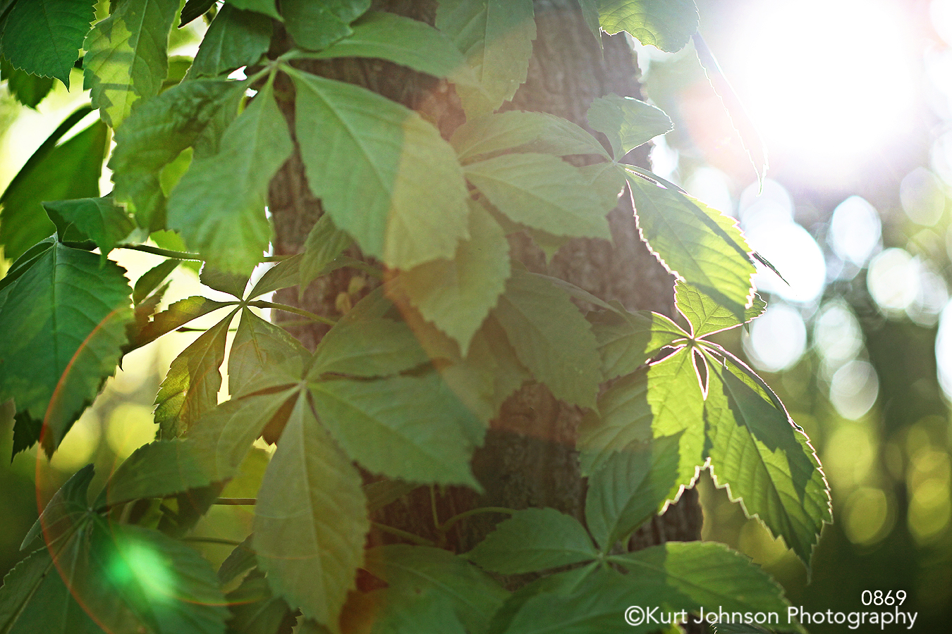 green leaves sun sunflare shadows tree close up trees