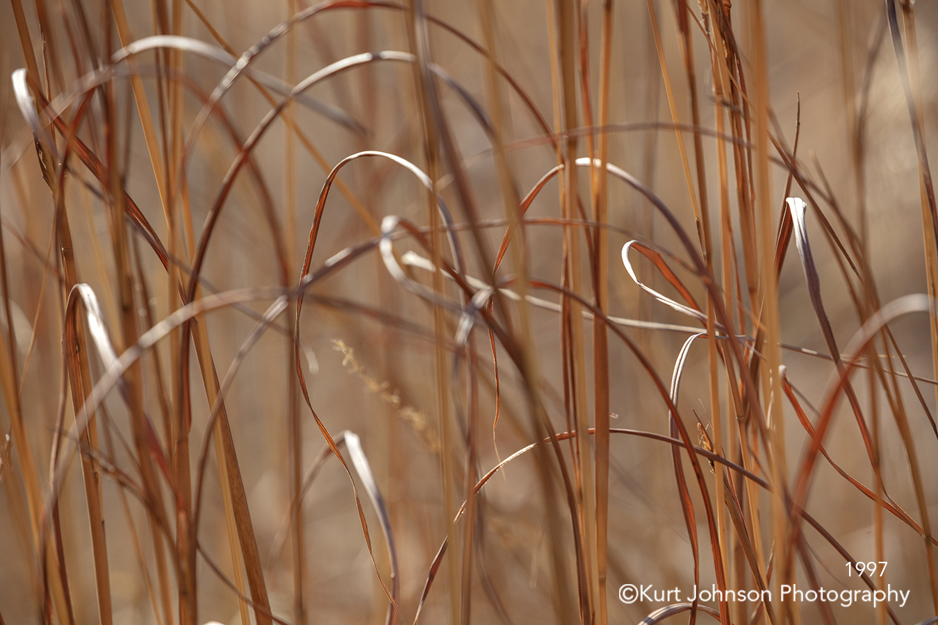 brown grass grasses field macro close up detail