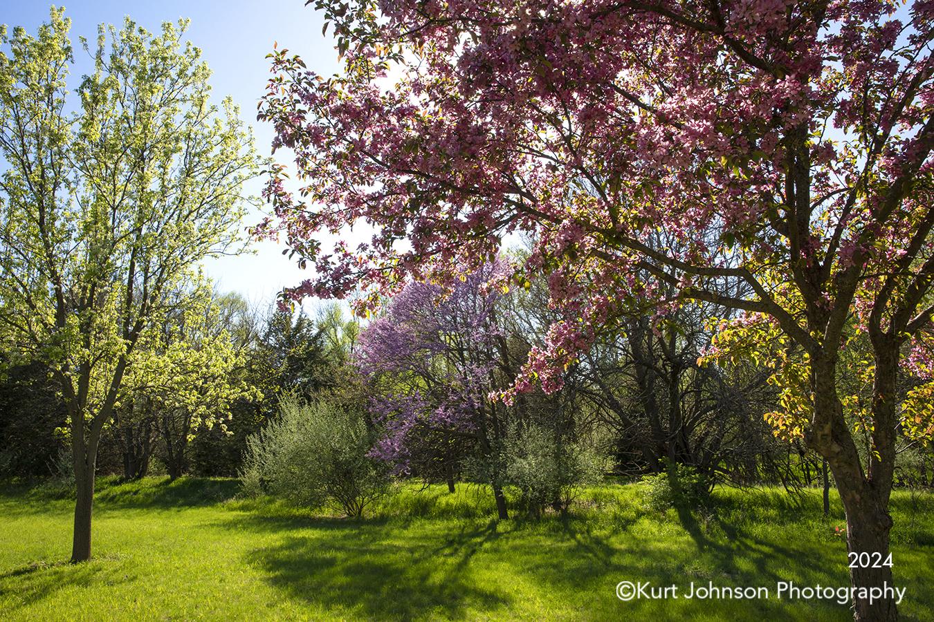 purple pink spring tree trees landscape sunlight shadows green grass