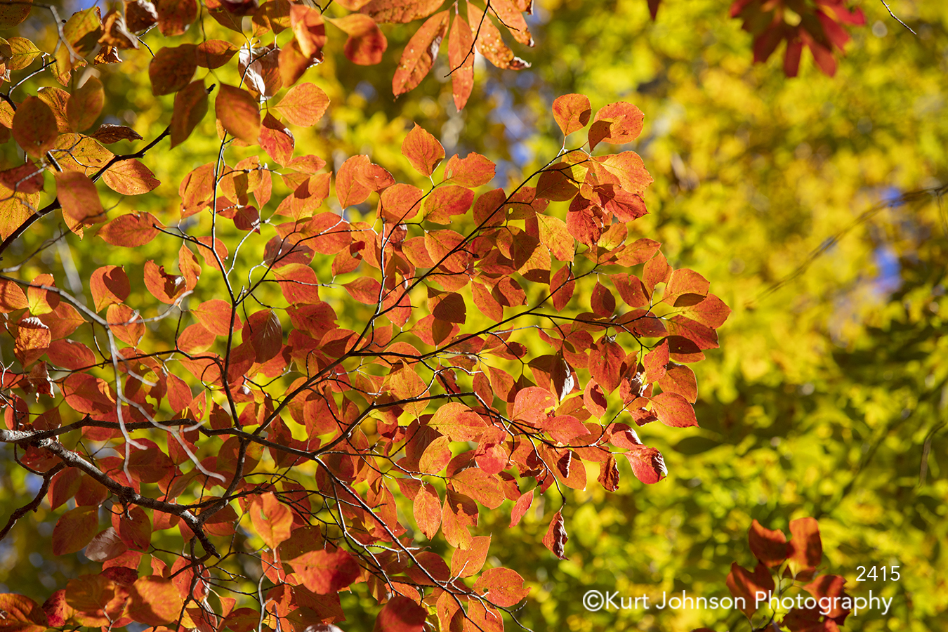 red orange green autumn fall leaves tree branches