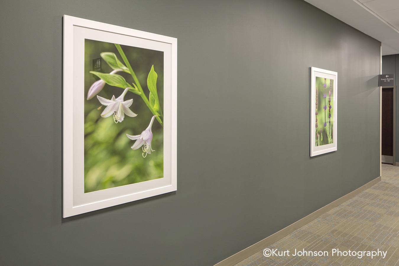 lauritzen white frame matte framed flower botanical nature art install flowers hallway corridor installation