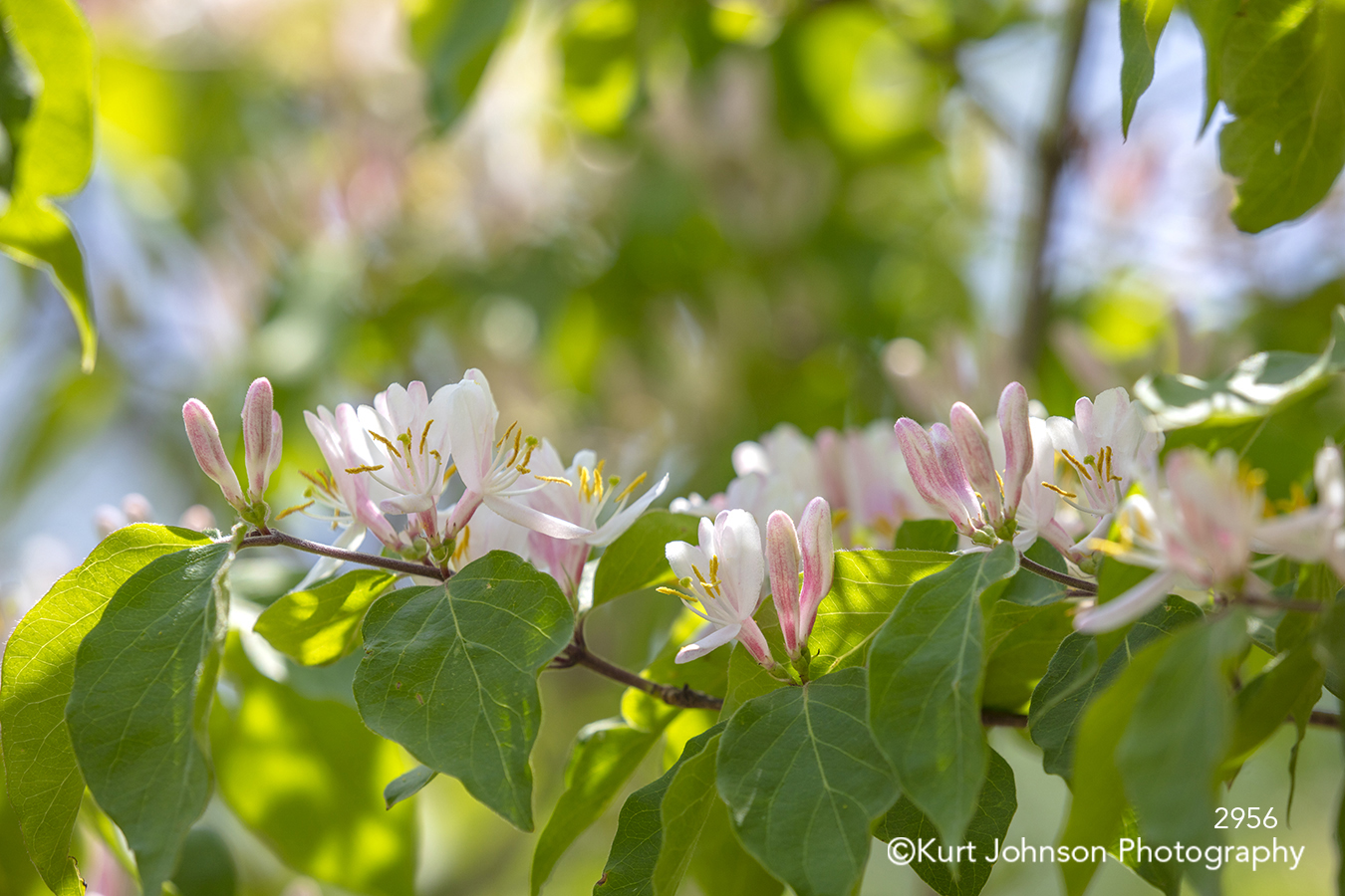 pink spring flower flowers green leaves branch tree close up detail